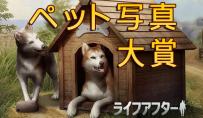 【コンテスト】ペット写真大賞